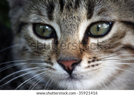Beautiful young cat - selective focus on the left cat eye