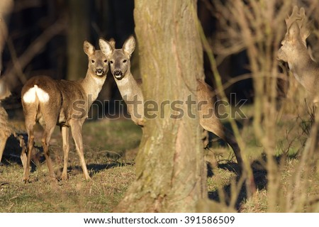 Beautiful young deer in forest (Cervidae) - stock photo