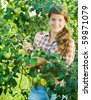 Beautiful young farm girl picking apples from the apple tree - stock photo