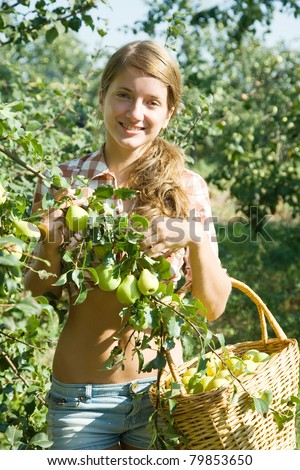 Beautiful young farm girl picking apples from the apple tree