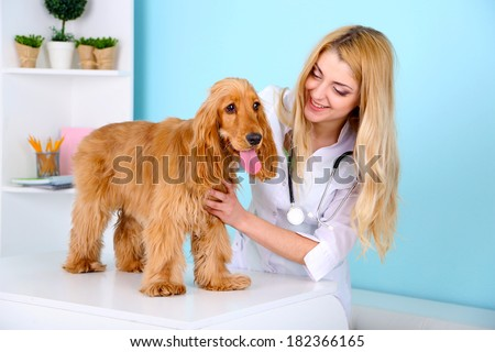 Beautiful young female veterinarian examining dog in clinic - stock photo