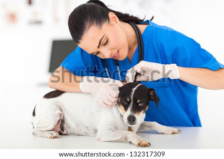 beautiful young female veterinarian examining pet dog - stock photo