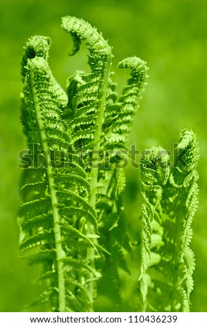 Beautiful young green fern leaves in forest - stock photo