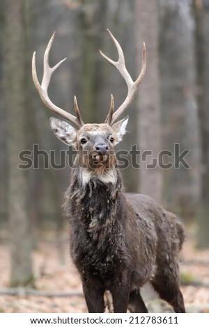 Beautiful young red deer in forest