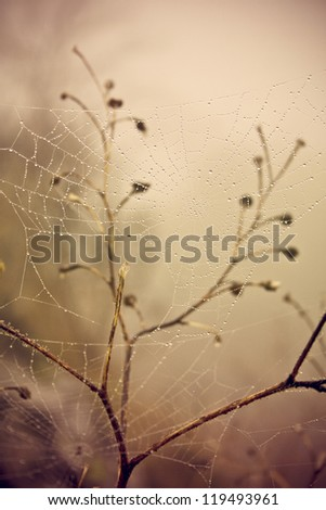 Beautiful zoomed spider web with the drops of the rain in autumn colors - stock photo