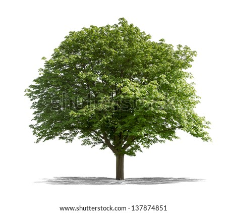 Beautifull green tree on a white background in high definition - stock photo