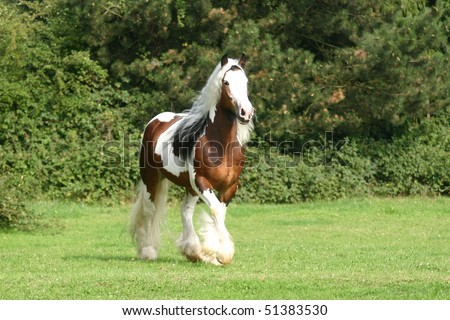 beautifull stallion - stock photo
