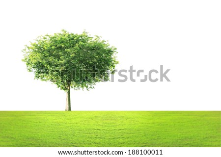Beautifull the green tree landscape  - stock photo
