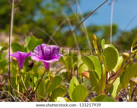 beautifull violet on green grass - stock photo