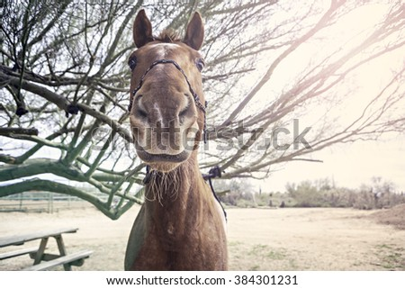 beautifully lit horse standing near a tree with the sun shining down - stock photo