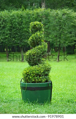 Beautifully manicured park plant used as a landscape detail. - stock photo