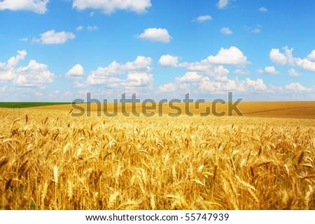 beautifully summer landscape - stock photo
