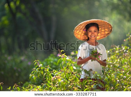 Beauty asian child girl pick flowers in the field on a sunny summer day. Kids and nature. Children in country. Copy space - stock photo