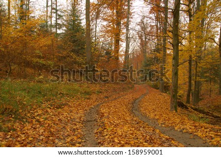 Beauty autumn forest with leaves - stock photo