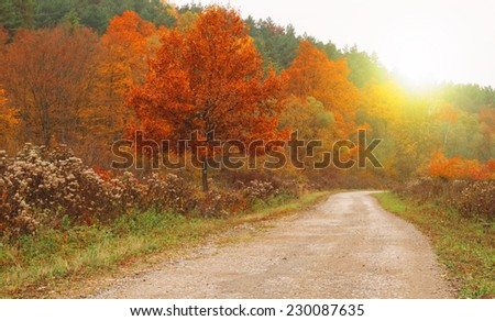 Beauty autumn road with trees - stock photo