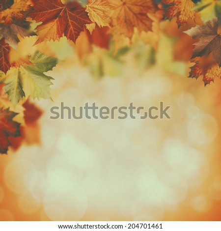beauty autumnal backgrounds with faded colors - stock photo