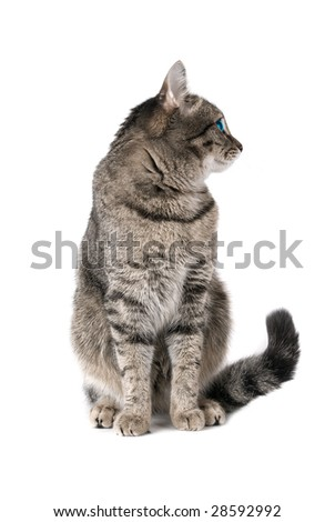 Beauty Cat with green eyes on white - stock photo