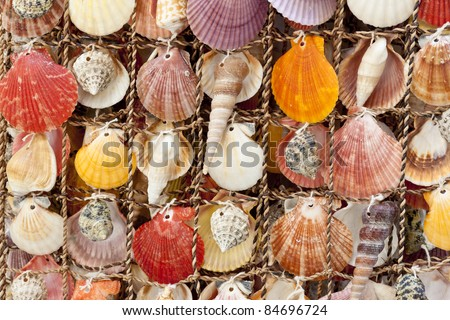 Beauty colorful shells background. Montenegro. Summery day. - stock photo