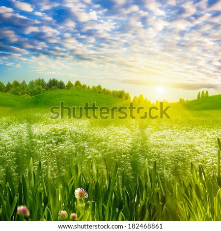Beauty evening on the meadow, abstract summer landscape - stock photo