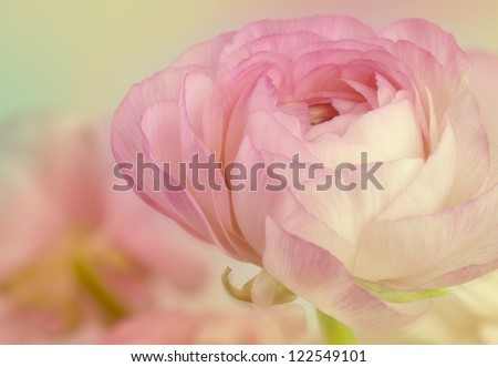 beauty flower holiday card background - stock photo
