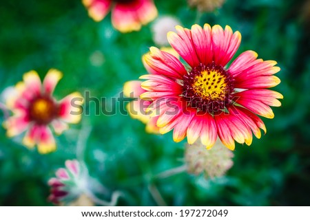 beauty  flower on green background, flower garden - stock photo