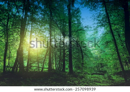 Beauty forest with sunrays in the morning - stock photo