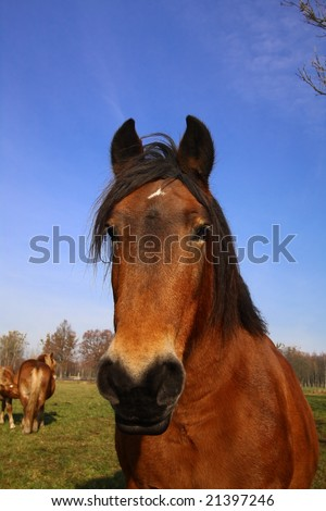 beauty horse on the green grass and blue sky