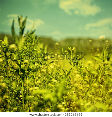 Beauty meadow, abstract natural backgrounds for your design - stock photo