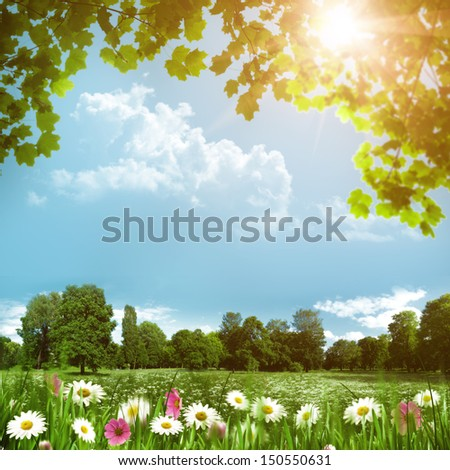 Beauty meadow with daisy flowers, abstract natural backgrounds - stock photo