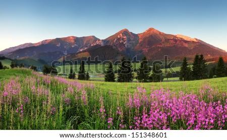 Beauty mountain panorama with flowers - Belianske Tatry - stock photo