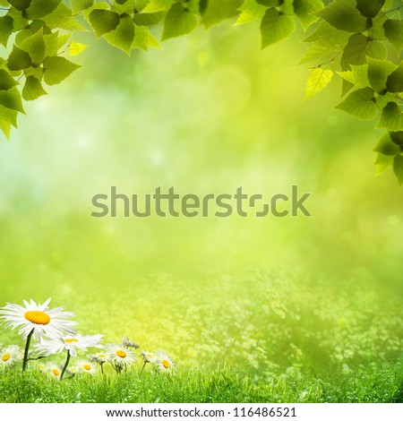Beauty natural backgrounds for your design - stock photo