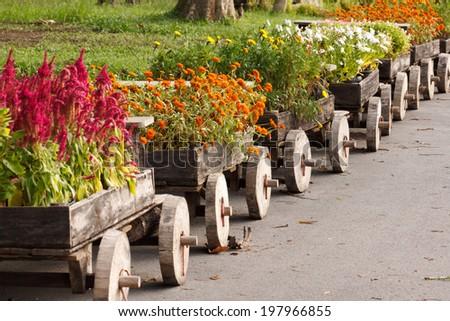 beauty of flower in garden - stock photo