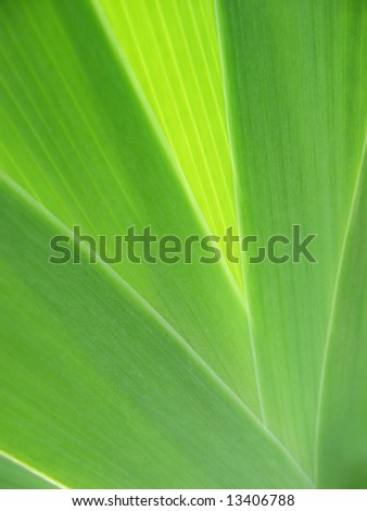 Beauty of leaf texture - stock photo