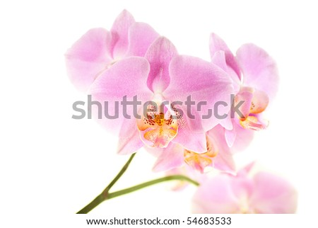 Beauty Orchid on the white background - stock photo
