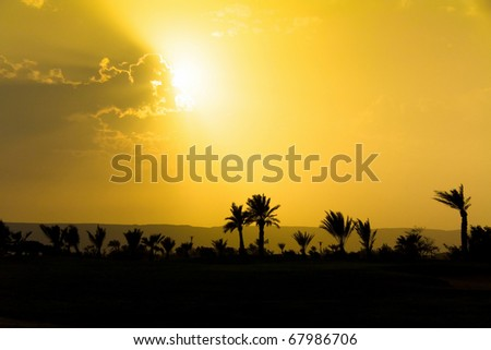 Beauty Palm Bliss - stock photo