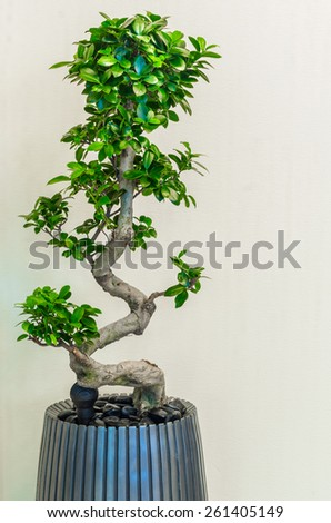 Beauty plants on corridor in business office - stock photo