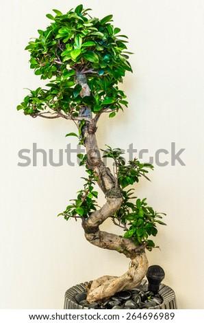Beauty plants on corridor in business office - stock photo