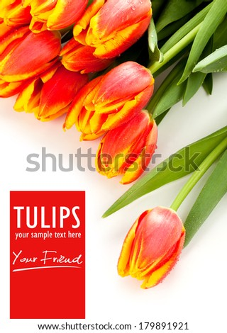Beauty red tulips and isolated text - stock photo