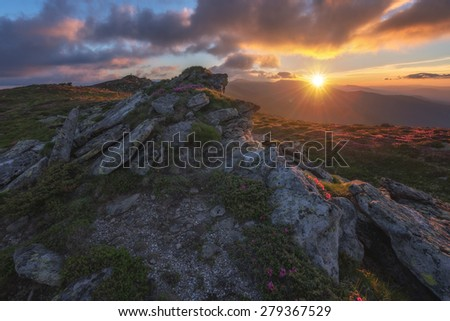 beauty rhododendron in high mountains - stock photo
