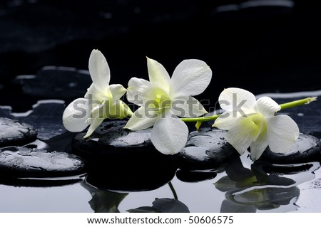 Beauty row of orchid and stone with reflection