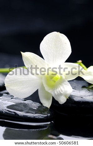 Beauty row of orchid and stone with water drops - stock photo