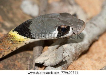 Beauty snake in forest