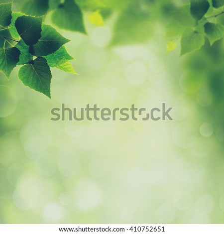 Beauty spring and summer backgrounds with birch foliage - stock photo
