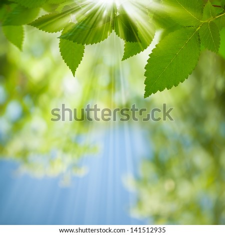 Beauty Summer Day. Abstract environmental backgrounds for your design - stock photo