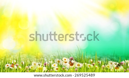 Beauty summer day on the meadow. Abstract natural backgrounds for your design - stock photo