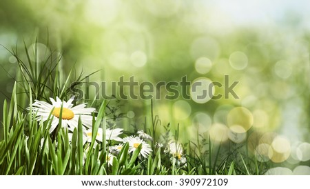 Beauty summer day with daisy flowers and bokeh, natural banner - stock photo