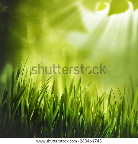 Beauty summer foliage, abstract natural backgrounds - stock photo