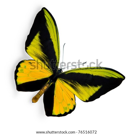 Beauty tropical butterfly isolated on white - stock photo
