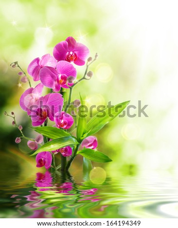 beautyful orchid and bamboo for border treatment spa on water  - stock photo