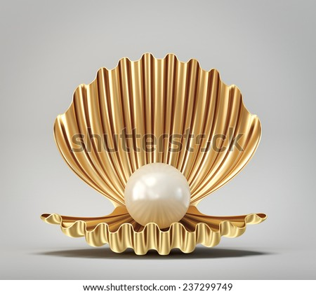 beautyful shell isolated on a grey background - stock photo